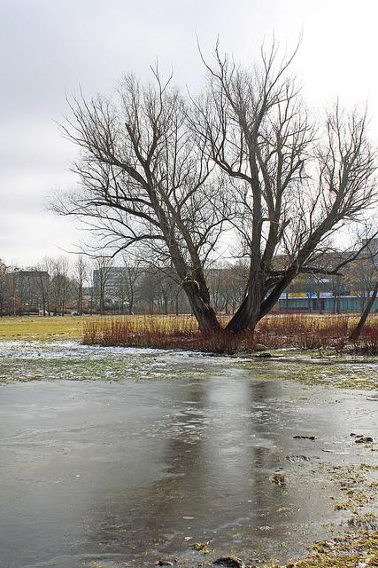 Kulturpark in Neubrandenburg