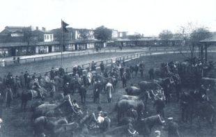 Pferdemarkt in Neubrandenburg